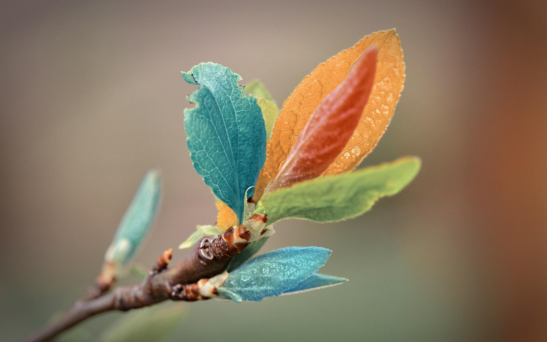 Test Thread-colorful_leaves-1920x1200.jpg